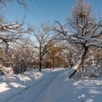 зимний день :: Андрей ЕВСЕЕВ