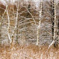 Зимний лес :: Елена Решетникова