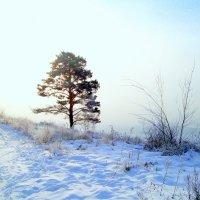 Сибирская зима :: alemigun