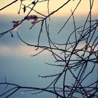Зима чтоль опять ? :: Paul B.