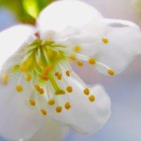 Весна :: Александра Козаева