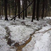 3 января 2014 (прошлая зима) :: Андрей Лукьянов