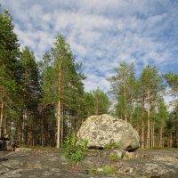 И на камнях растут.................... :: Елена Швецова