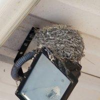 Ласточкино гнездо :: Сергей Леонтьев