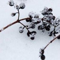 ...на снегу :: Максим Богатырёв