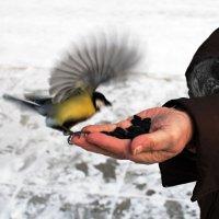 Синички зимой :: Борис Соловьев