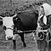 Бабушка и Роза :: Наталья Гусева
