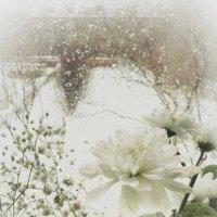Дождь на снег! :: Игорь