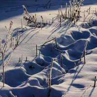 Следы на снегу :: Лилия Рахматуллина