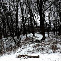 Зимний вечер в Ботаническом саду Фото №1 :: Владимир Бровко