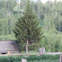 Дерево :: Владимир Иванец