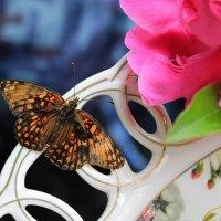 Цветная бабочка в шелку... :: Галина Стрельченя