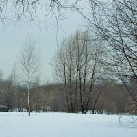 Зимняя паутина :: Yulia Sherstyuk