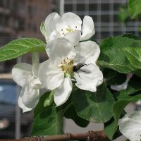На весенних цветах :: Natali