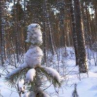 В зимнем бору :: Андрей