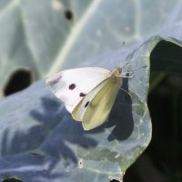 бабочка :: Лилия Рахматуллина