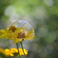 В пузыре :) :: Ирина Ли