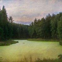 Заросший пруд. :: lady-viola2014 -