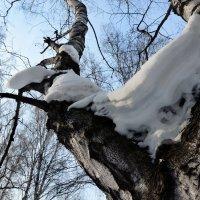 шапки зимы :: Евгений Фролов