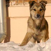 Бездомный пес :: Ольга Рав