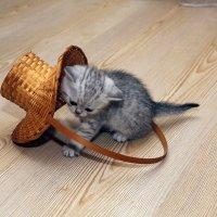 Живая шляпа? :: Викуля Ясное Солнышко
