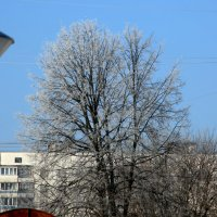 успеть поймать иней в январе :: Олег Лукьянов