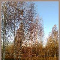 Поздняя осень :: Лидия Симова
