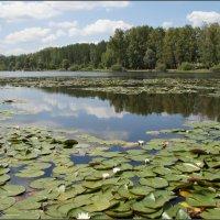 Озеро Манжерок :: Наталия Григорьева