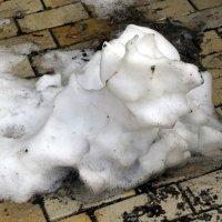 Снего-пес :: Сергей Рубан