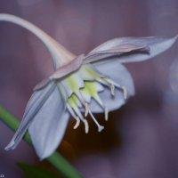 Цветы :: Мария Туркина