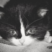 Котенок Сеня :: Yurii Skripov