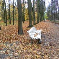 Вот и осень .... :: Агриппина