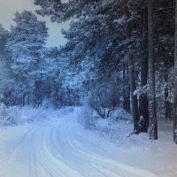 Сумерки в лесу :: Павлова Татьяна Павлова
