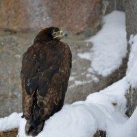хищьний птиц :: Владислав Кравцов