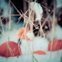 Яблоки на снегу :: Яна Л