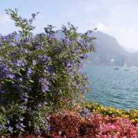 Lago De Lugano :: Алёна Савина