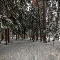 Финская зима. :: Elena Klimova