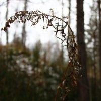 В лесу :: Lou Rence