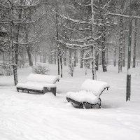 На бульваре падал снег :: Василий Аникеев
