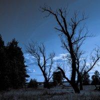 И деревья умирают вместе..... :: Алла ************