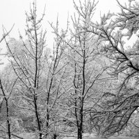 Холодно... :: Яна Гоголь