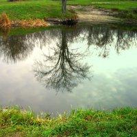 зеркало жизни :: Назар