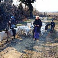 В одном из поселков Кавказа :: Tata Wolf