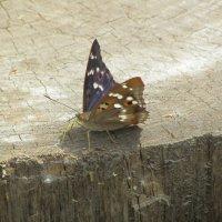 бабочка :: tgtyjdrf