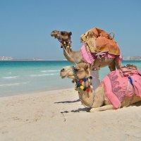 Песок, море и верблюды. :: Ирина Токарева