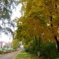 Золотая осень. :: Елена Семигина