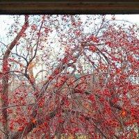 Осень в окне :: Андрей Смирнов