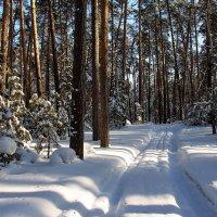 Вопреки метельным снеговеям... :: Лесо-Вед (Баранов)