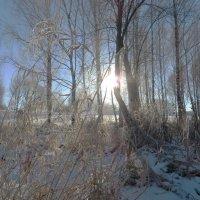 Морозным солнечным днём! :: Ирина Олехнович