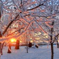 Вечер в парке :: Сергей Григорьев